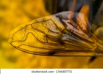 Bee wing. Macro photo. Fragment of a wing of a bee. Macro texture of an insect wing on a yellow background