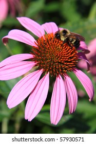 A bee is at work on a beautiful pink and orange flower.