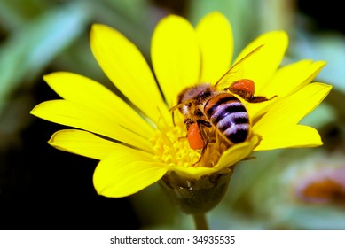 Bee in a yellow flower