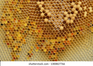 Beebread ,larvae of bees ,honey.