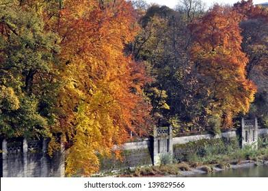beech in autumn foliage in munich 2