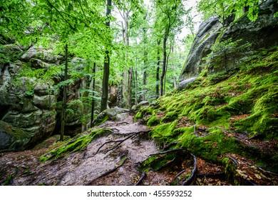 Beech forest after a rain.