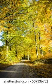 Beech forest in autumn. Forest road.