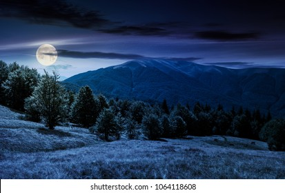 beech forest on grassy meadows in mountains at night in full moon light. beautiful Landscape at the foot of Carpathian mountain Apetska