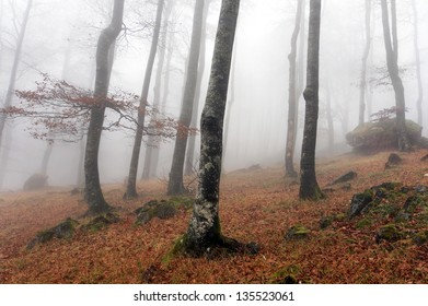 beech forest in Urbasa with fog