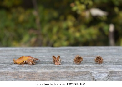 Beech fruits and beech leaves on a wooden background against a background of autumn leaves