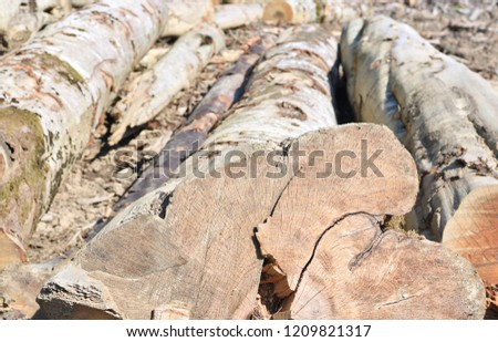 Beech Timber Harvesting Industrial Photo Stock Photo Edit Now
