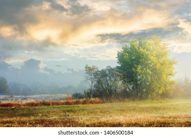 beech trees in the fog at sunrise. grassy meadow. cloud on the blue sky above field with weathered grass in hoarfrost