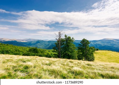 beech trees on the edge of a grassy hill. gorgeous cloudscape above grassy meadow. mountain ridge with alpine meadows in the distance. wonderful sunny day and good weather for outdoor activities