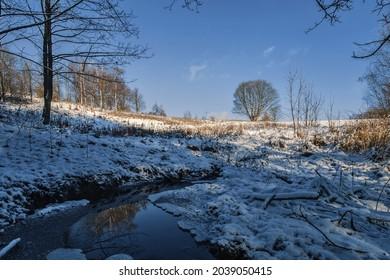 Beech in the winter landscape. - Shutterstock ID 2039050415