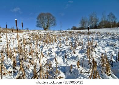 Beech in the winter landscape. - Shutterstock ID 2039050421