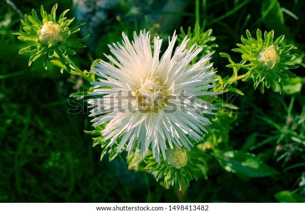 Beeflowers Plants On Earth Closeup Sun Stock Photo Edit Now