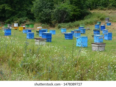 Beehive and bees. Colored wooden beehives - honey bees flying around wooden beehives. Colorful hives of bees in meadow. Beehives near field with flowers. Bee hives in the woods. House for honeybee.