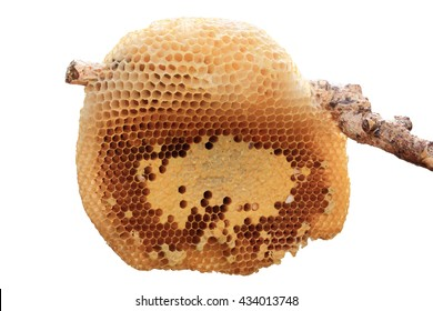 Beehive closeup on stick isolated on white background.