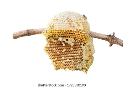 Beehive closeup on stick of tree isolated on white background, clipping path included.