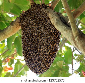 Wild Beehive Images, Stock Photos & Vectors | Shutterstock