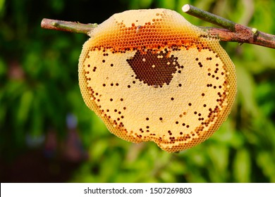 beehive on stick of tree with green nature background