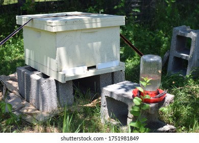 Beehive with sugar water boost jar in a location with dappled sunlight for optimal honey production in farm field in Virginia, USA