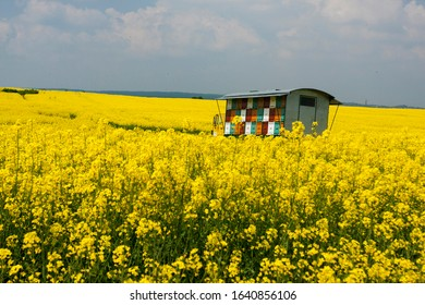 Beehive wagon in th emiddle of the  fields of rapeseed