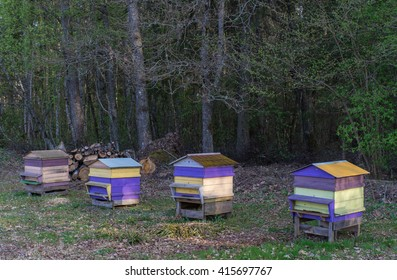 Beehives in the apiary. Beekeepers.