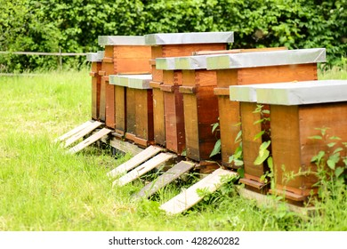 Beehives with bees on meadow