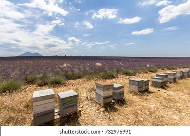 Beehives in a big lavender field in Provence, France
