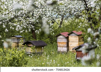 Beehives in a blooming orchard. Beekeeping in the summer