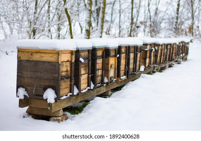 Beehives boxes in wintertime in forest