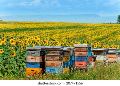 beehives in corner of sunflower field
