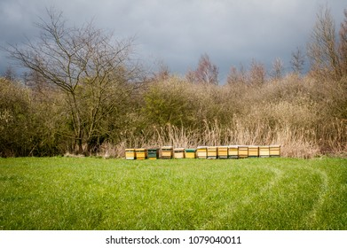 Beehives in a field with reeds and grass