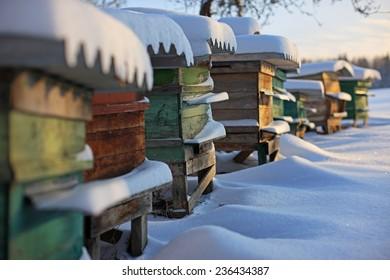 Bienenstöcke im Garten im Winterschneeboden