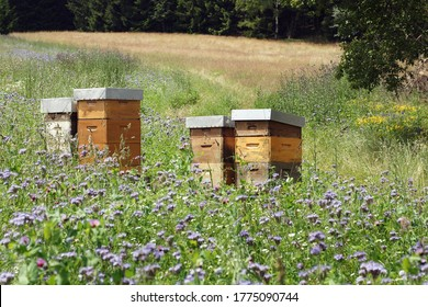 Beehives in the meadow  full of flowers