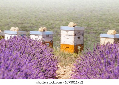 Beehives next to lavender field. Close up. Provence, France.