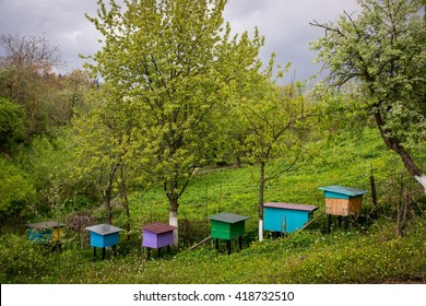 Beehives on green spring lawn