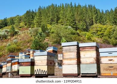 Beehives. Traditional colored wooden box. Muniellos, Asturias, Spain. Horizontal