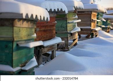 beehives in the winter garden