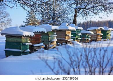 Bienenstöcke im Wintergarten
