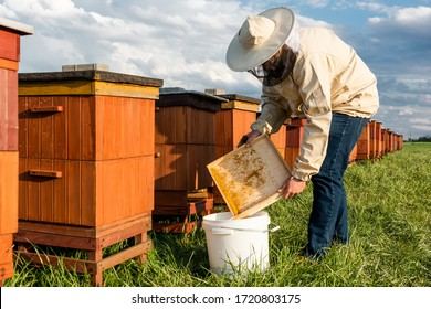 Beekeeper or Apiarist Collecting Pollen from Beehive. Healthy Bio Food and Beekeeping.