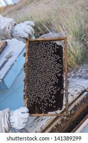 beekeeper and bee