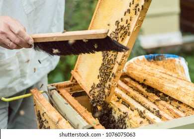 Beekeeper brushing bees from honeycomb with brush