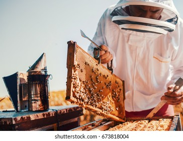 Beekeeper checking  honeycomb frame with bees in his apiary