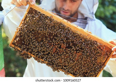 Beekeeper collecting honey selective focus on a honeycomb and bees