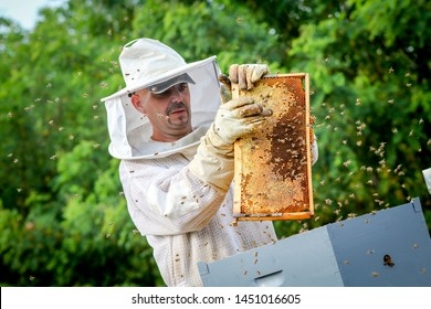 Beekeeper Controlling Colony And Bees In Protective Uniform