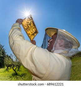 Beekeeper controls the honeycomb in the sunlight