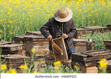 The beekeeper in the field of flowers.