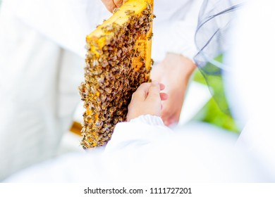 Beekeeper gives the children an opportunity to touch and examine the honeycomb.