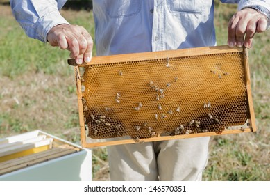 The beekeeper has control over a framework with honeycomb