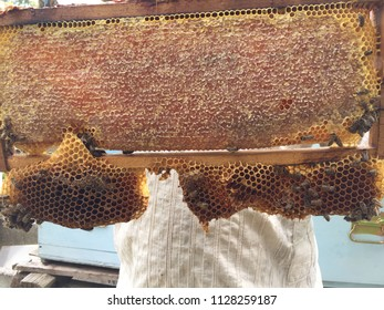 A beekeeper and his honeycomb with the bees