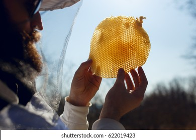 A beekeeper holding and examines a fragment at empty honeycomb on sun sky background. Horizontal outside shot.
