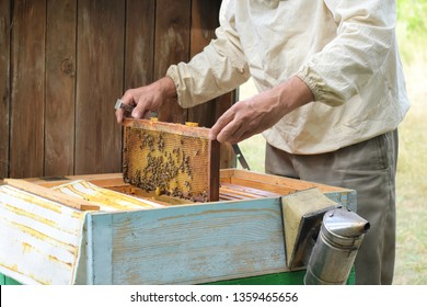 The beekeeper holding a honeycomb with bees. Beekeeper inspecting honeycomb frame at apiary at the summer day. Man working in apiary. Apiculture. Beekeeping concept. bees in the hive